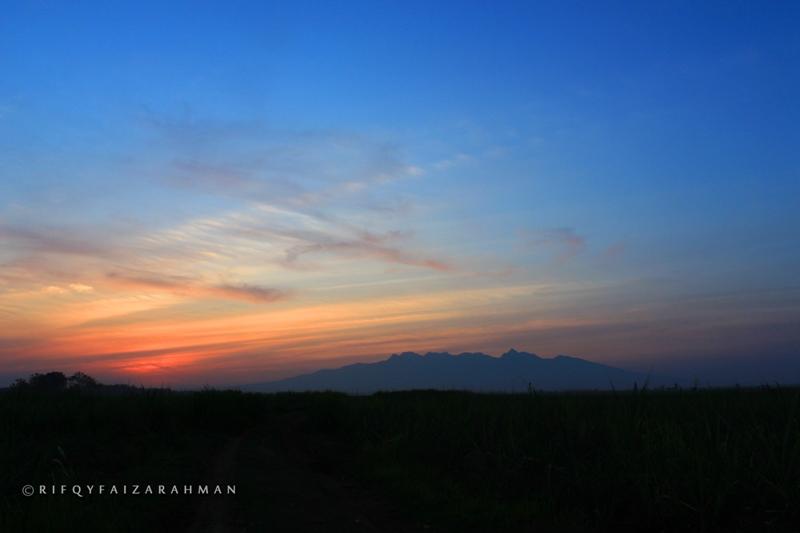 Siluet Gunung Muria dan sunset terlihat dari ladang tebu Wedarijaksa, Kabupaten Pati