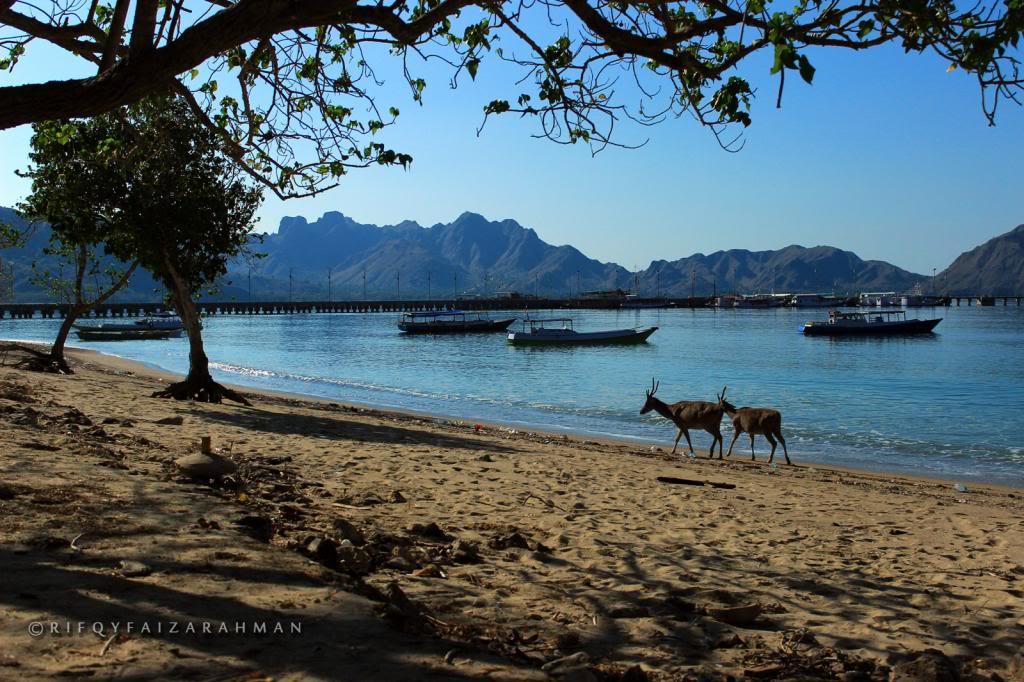 Taman Nasional Komodo Nusa Tenggara Timur