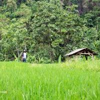 Air Terjun Gua Kelelawar (Coban Goa Lowo) Malang