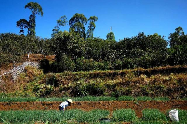 Tipikal lahan pertanian di Dusun Krajan, Gadingkulon.