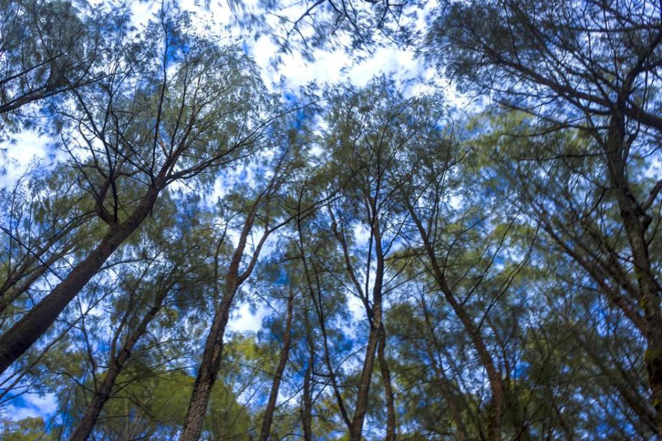 Hutan di Pegunungan Putri Tidur