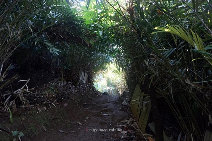 Jalan setapak yang membelah kebun salak ke arah Kapas Biru. Di sepanjang jalan raya Ampelgading-Pronojiwo juga banyak dijumpai kebun salak milik warga.