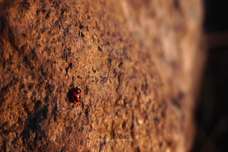 Pendakian Gunung Butak Jalur Batu