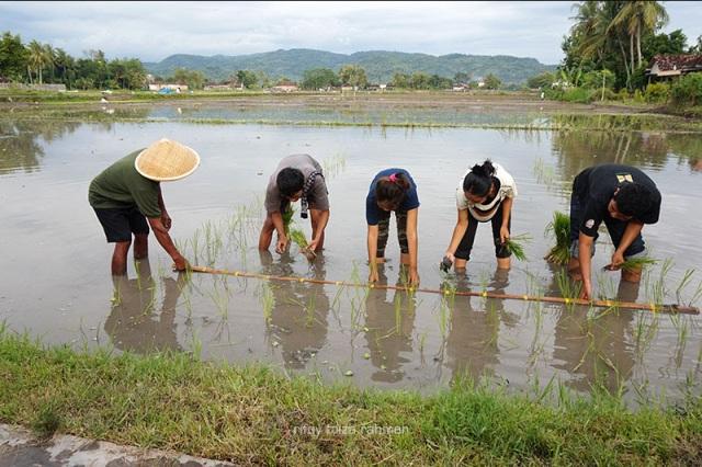 Joyo (kiri) mengarahkan Sitam (dua dari kiri) dan yang lain menanam padi