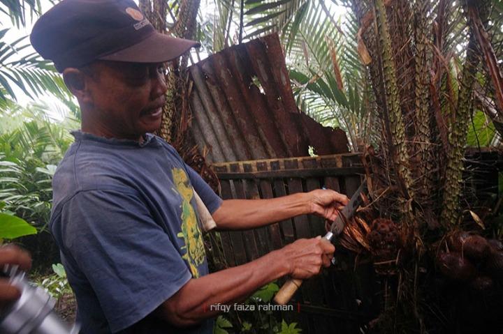 Harsono menunjukkan contoh bunga pada pohon salak