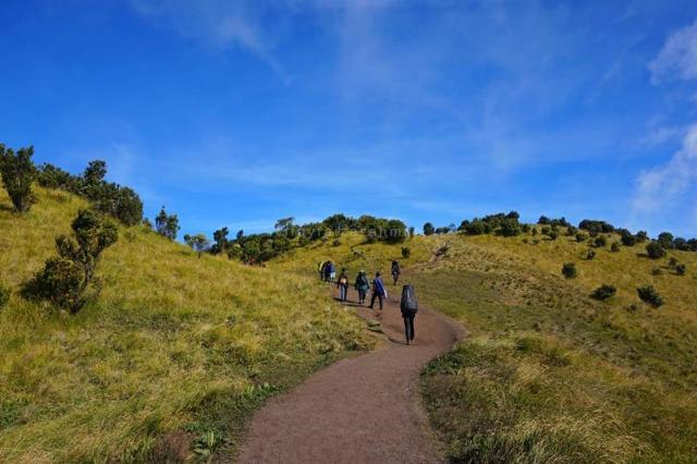 Trek datar di sektar Pos 4 atau Sabana 1 jalur Selo