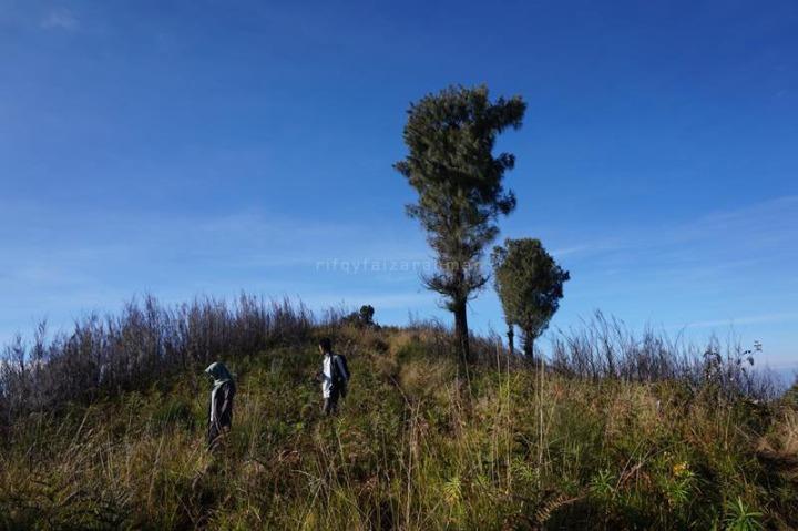 Vegetasi yang tumbuh di puncak Butak