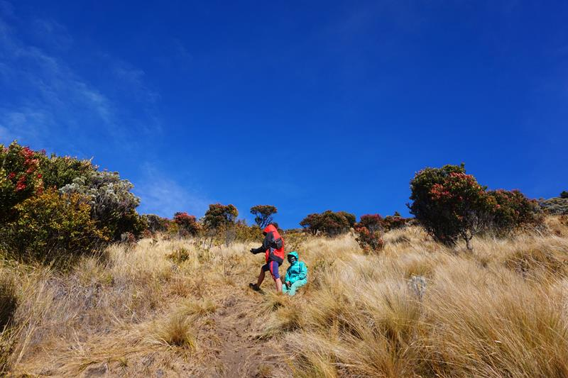 Dua orang pendaki sedang istirahat di tengah jalur ke puncak, di antara rerumputan, edelweis dan cantigi