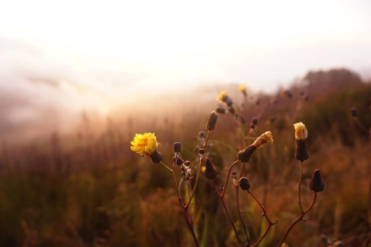 Vegetasi di puncak Gunung Butak